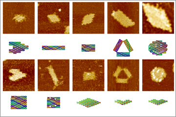 Complex DNA and RNA origami created from single-strands