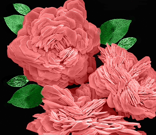 Han Zhang, Chinese University of Hong Kong. Scanning electron microscope image of gold nanostructure. By the overgrowth of the Au nanoplate, we obtained a peony-like Au nanostructure. Peony is a famous flower of China.